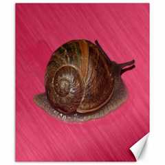 Snail Pink Background Canvas 20  x 24