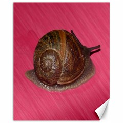 Snail Pink Background Canvas 11  x 14