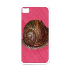 Snail Pink Background Apple Iphone 4 Case (white)