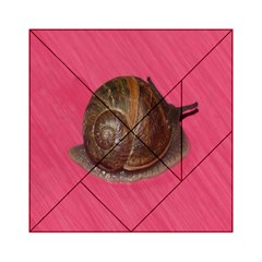 Snail Pink Background Acrylic Tangram Puzzle (6  x 6 )