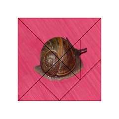Snail Pink Background Acrylic Tangram Puzzle (4  X 4 )