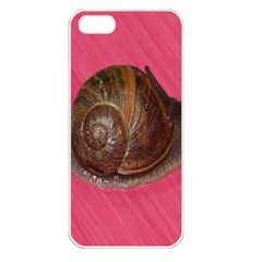 Snail Pink Background Apple Iphone 5 Seamless Case (white)