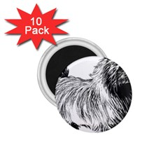 Cairn Terrier Greyscale Art 1.75  Magnets (10 pack)