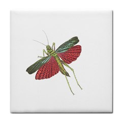Grasshopper Insect Animal Isolated Tile Coasters