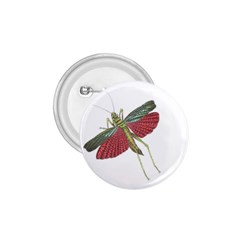 Grasshopper Insect Animal Isolated 1 75  Buttons