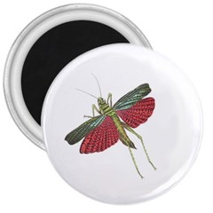 Grasshopper Insect Animal Isolated 3  Magnets