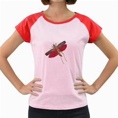 Grasshopper Insect Animal Isolated Women s Cap Sleeve T Shirt