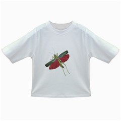 Grasshopper Insect Animal Isolated Infant/Toddler T-Shirts