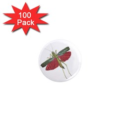 Grasshopper Insect Animal Isolated 1  Mini Magnets (100 Pack)