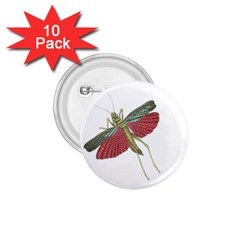 Grasshopper Insect Animal Isolated 1.75  Buttons (10 pack)