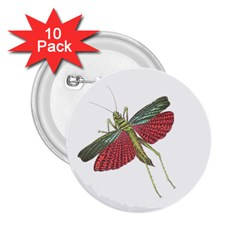 Grasshopper Insect Animal Isolated 2.25  Buttons (10 pack)