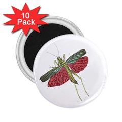 Grasshopper Insect Animal Isolated 2.25  Magnets (10 pack)