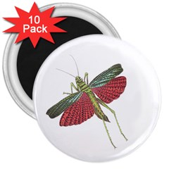 Grasshopper Insect Animal Isolated 3  Magnets (10 pack)