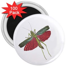Grasshopper Insect Animal Isolated 3  Magnets (100 pack)