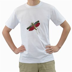 Grasshopper Insect Animal Isolated Men s T-Shirt (White) (Two Sided)