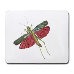 Grasshopper Insect Animal Isolated Large Mousepads