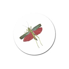 Grasshopper Insect Animal Isolated Magnet 3  (Round)