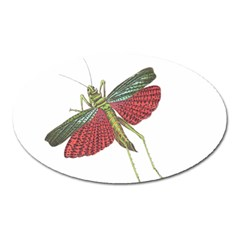 Grasshopper Insect Animal Isolated Oval Magnet