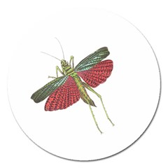 Grasshopper Insect Animal Isolated Magnet 5  (round)