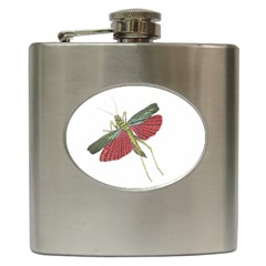 Grasshopper Insect Animal Isolated Hip Flask (6 oz)