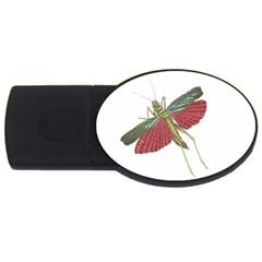 Grasshopper Insect Animal Isolated USB Flash Drive Oval (1 GB)