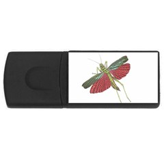 Grasshopper Insect Animal Isolated USB Flash Drive Rectangular (2 GB)