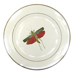 Grasshopper Insect Animal Isolated Porcelain Plates