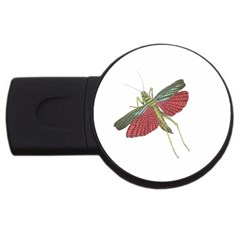 Grasshopper Insect Animal Isolated USB Flash Drive Round (4 GB)