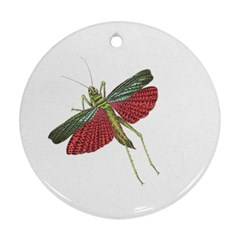 Grasshopper Insect Animal Isolated Round Ornament (Two Sides)