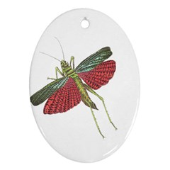 Grasshopper Insect Animal Isolated Oval Ornament (Two Sides)