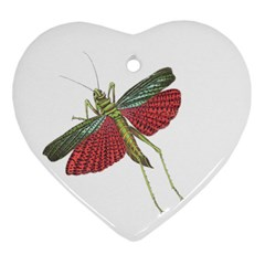 Grasshopper Insect Animal Isolated Heart Ornament (Two Sides)