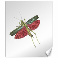 Grasshopper Insect Animal Isolated Canvas 8  X 10