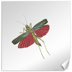 Grasshopper Insect Animal Isolated Canvas 12  x 12