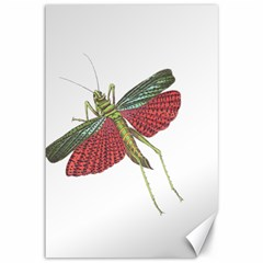 Grasshopper Insect Animal Isolated Canvas 12  x 18