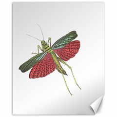 Grasshopper Insect Animal Isolated Canvas 16  x 20