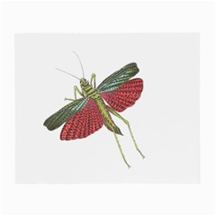 Grasshopper Insect Animal Isolated Small Glasses Cloth (2-Side)