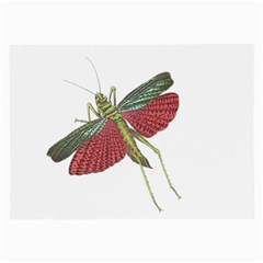 Grasshopper Insect Animal Isolated Large Glasses Cloth