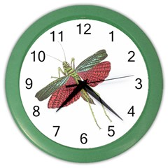 Grasshopper Insect Animal Isolated Color Wall Clocks