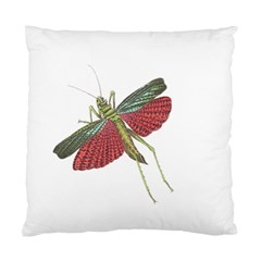 Grasshopper Insect Animal Isolated Standard Cushion Case (Two Sides)