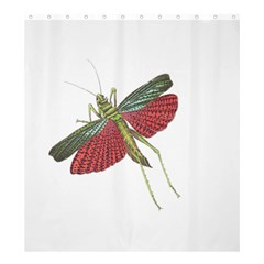 Grasshopper Insect Animal Isolated Shower Curtain 66  x 72  (Large)