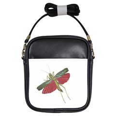 Grasshopper Insect Animal Isolated Girls Sling Bags