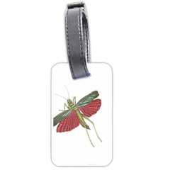 Grasshopper Insect Animal Isolated Luggage Tags (two Sides)
