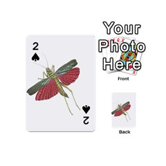 Grasshopper Insect Animal Isolated Playing Cards 54 (Mini)