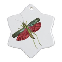 Grasshopper Insect Animal Isolated Ornament (Snowflake)