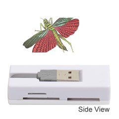 Grasshopper Insect Animal Isolated Memory Card Reader (Stick)