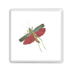 Grasshopper Insect Animal Isolated Memory Card Reader (Square)
