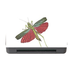 Grasshopper Insect Animal Isolated Memory Card Reader with CF