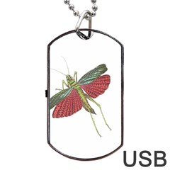 Grasshopper Insect Animal Isolated Dog Tag USB Flash (One Side)