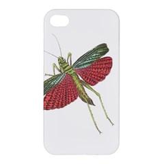 Grasshopper Insect Animal Isolated Apple iPhone 4/4S Hardshell Case
