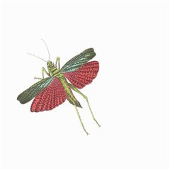 Grasshopper Insect Animal Isolated Small Garden Flag (Two Sides)